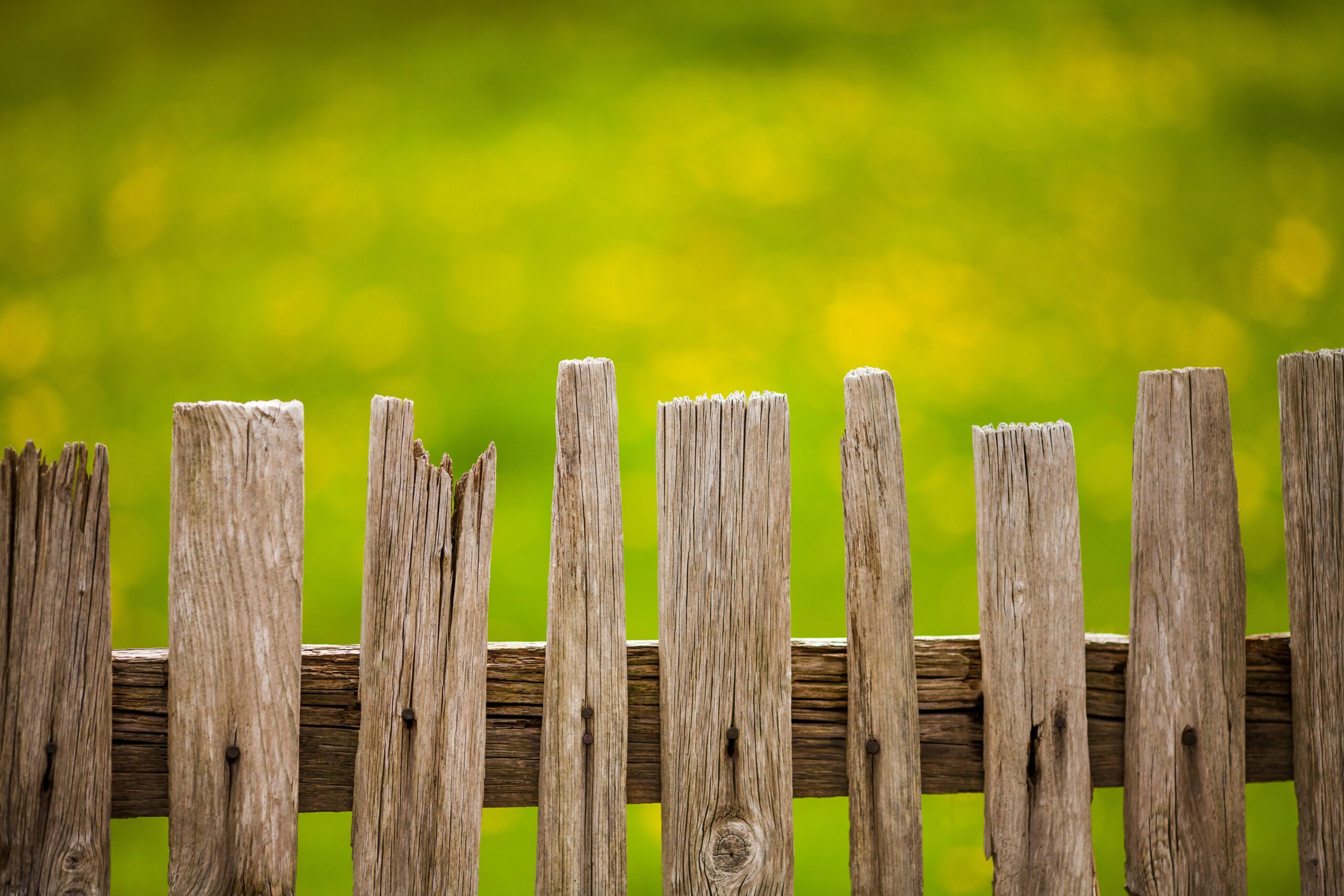 Wooden fence service in Tampa